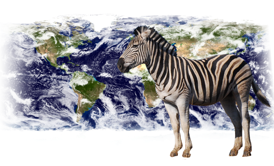 open PhD position: animal movement for remote sensing