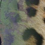 gradient_leopard_RS3a