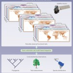 article: Monitoring plant functional diversity from space