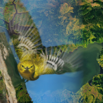 1 Postdoc and 1 PhD position in Bird biodiversity and remote sensing